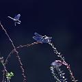 美的鳥虫写真館