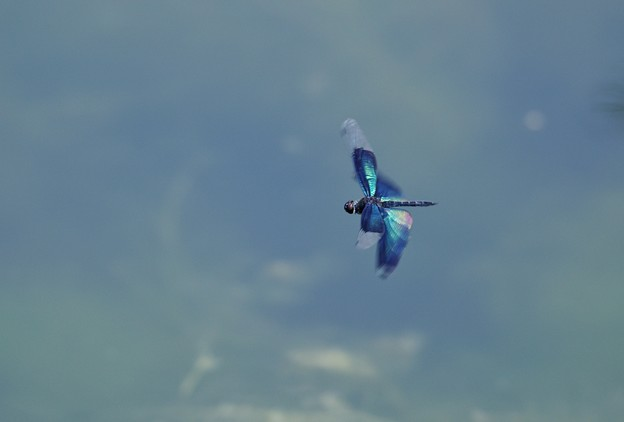 Photos: 飛翔。