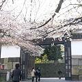 Photos: 100408 日本武道館の桜6