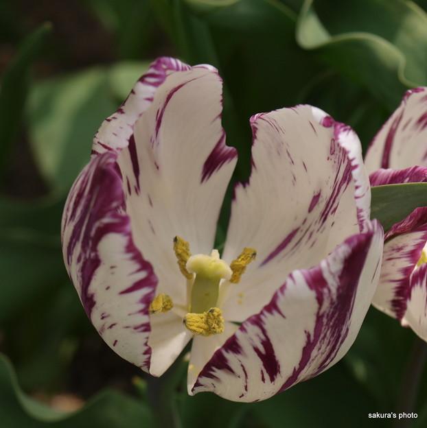 写真: 201104flower 703