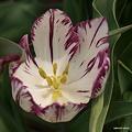 写真: 201104flower 723