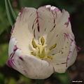 写真: 201104flower 731