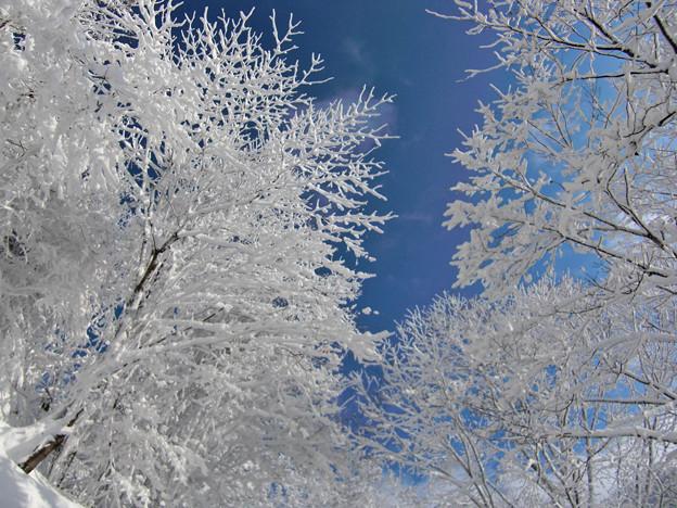あおぞらと雪の木たち その1