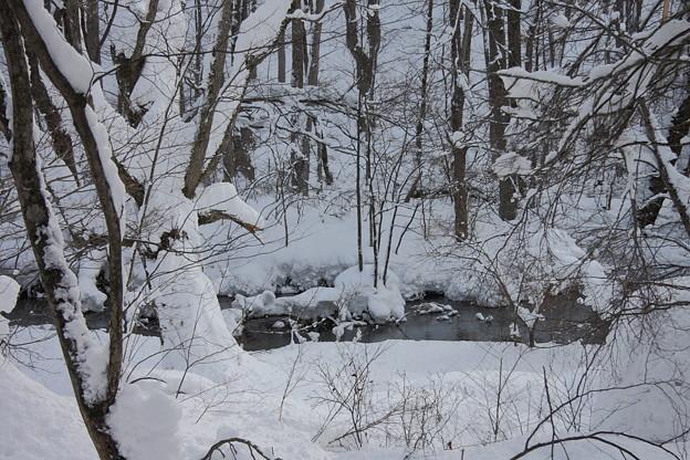 Photos: 雪の奥入瀬渓流