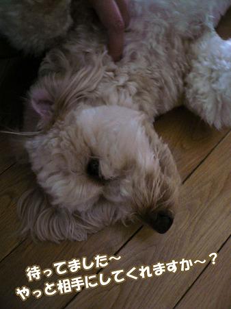 100512 くーかい of the day -1