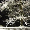 弘前城、大晦日、雪桜