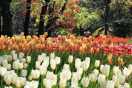 2010.04.19 横浜公園 チューリップ祭り-6
