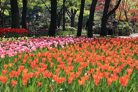2010.04.19 横浜公園 チューリップ祭り-8