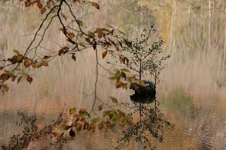 2010.10.28 蔦温泉 菅沼 秋色の沼面
