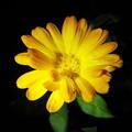 Photos: 201207050010