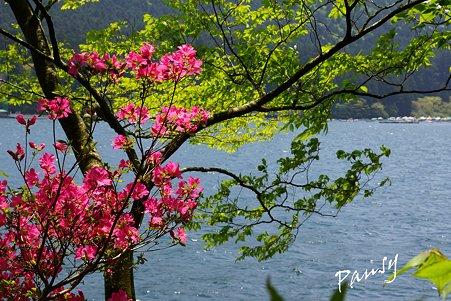 湖畔の彩・・