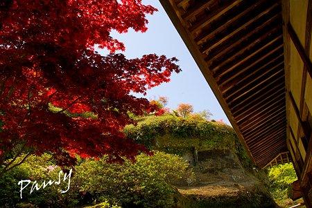新緑の海蔵寺・・3