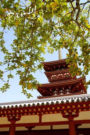 西塔と・・奈良 薬師寺にて・・7