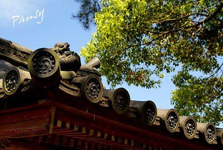 屋根の上の龍・・ 薬師寺にて・・