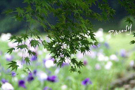 明月院 後庭園にて・・10