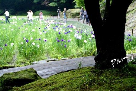 明月院 後庭園にて・・12