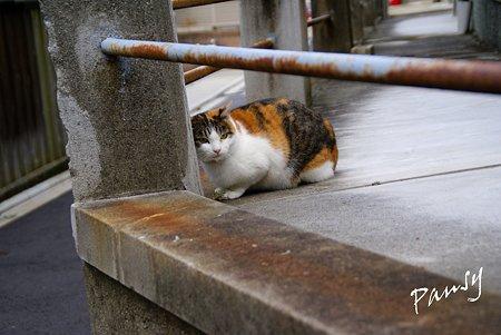 京都 泉湧寺付近で・・