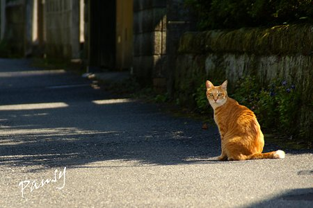 鎌倉の猫さん・・