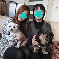 Photos: まるの家族
