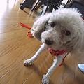 Photos: 目指せセレブ犬!