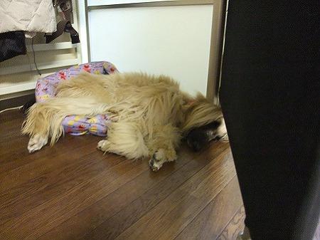小さなベッドからはみ出して寝るリア