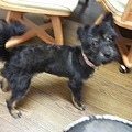 Photos: ぼく子犬
