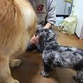 Photos: 北斗デカイぞ!