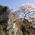 写真: 桜と乙女ヶ越と青い空