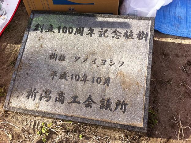 '11お花見 018