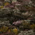 Photos: 黄色も有、梅の公園!(100314)