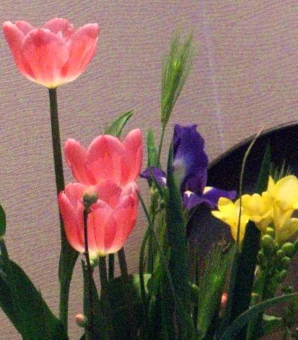 Photos: 花の一こま