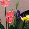 花の一こま