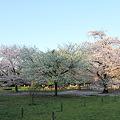 Photos: 100408-3井の頭公園