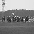 写真: 2010 優駿牝馬直線