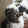 Photos: りすも雪化粧