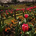 Photos: 別府の春