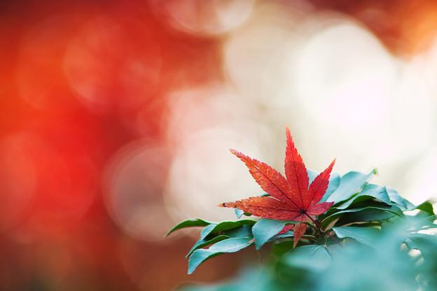 Photos: 赤い朝