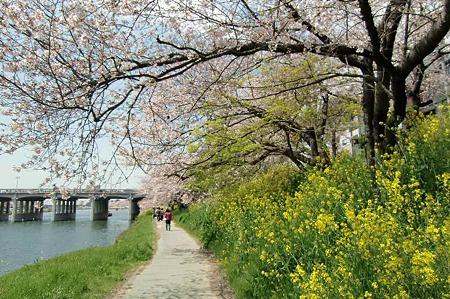 okazaki sakura matsuri-220407-7