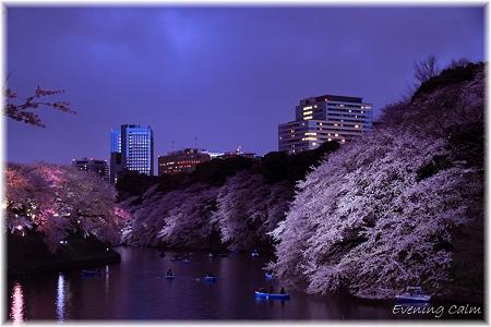 2010千鳥ヶ淵夜桜_005