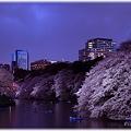 写真: 2010千鳥ヶ淵夜桜_005