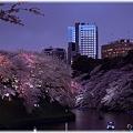 写真: 2010千鳥ヶ淵夜桜_006