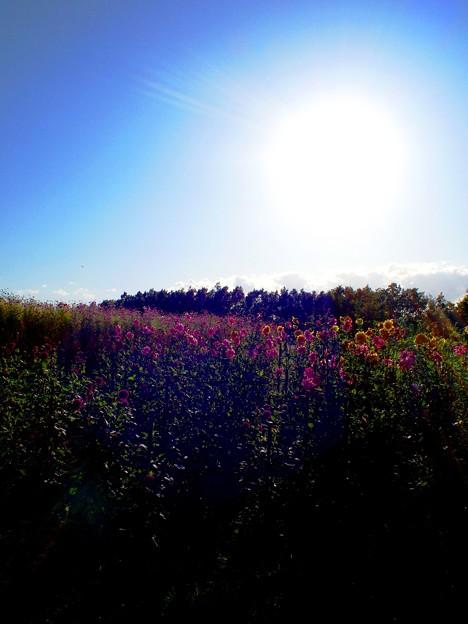 列車からの花景色