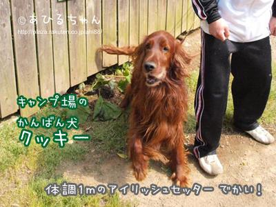 写真: 20110513_13