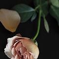 薔薇1205173