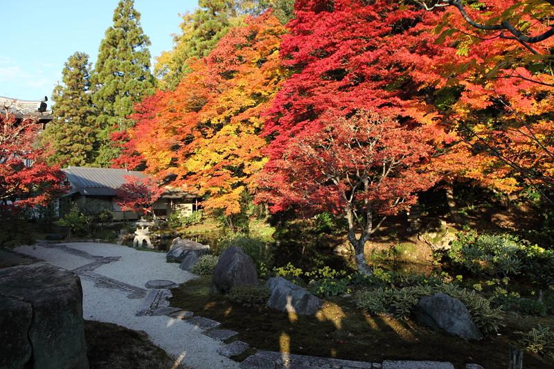 IMG_9986京都の紅葉_2010年11月
