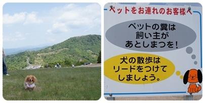 20120528 お散歩