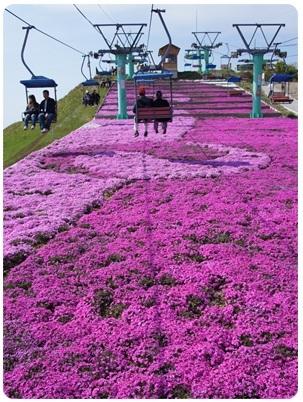 20120528 リフト(足元には芝桜)