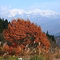 白山と紅葉とススキ