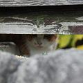 猫ちゃん 丹波篠山で