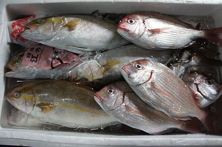 キラキラのお魚